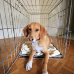 Crate Training Made Easy!