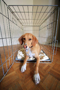 Crate Training Made Easy