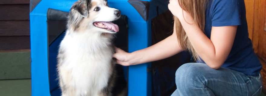 Soft Dog Crates Contribute to Your Dog's Well Being