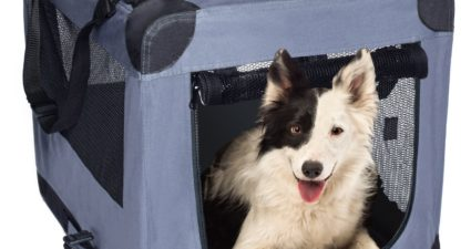 6 Ways Soft Crates Can Decrease Your Dog's Anxiety